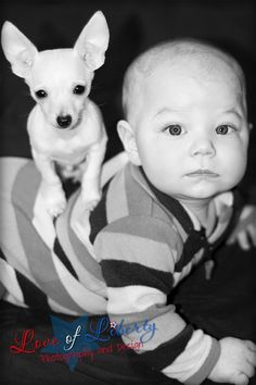adorable baby boy with teacup chihuahua