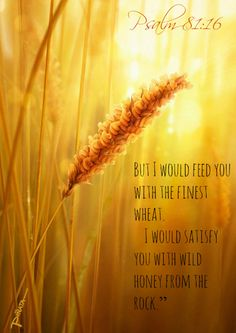 Psalm 81:16 But I would feed you with the finest wheat.      I would satisfy you with wild honey from the rock.""