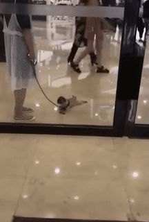 Awww lil pupper didn't wanna go but when his mama left him, he didn't wanna be alone 😍😍 Cute Puppies, Cute Dogs, Dogs And Puppies, Doggies, I Love Dogs, Puppy Love, Animals And Pets, Baby Animals, Animal Humour