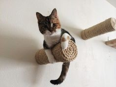 Make yourself the most stylish cat owner you know!