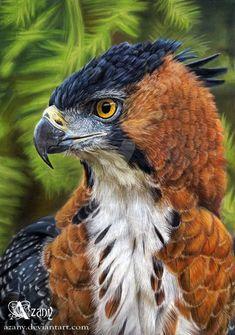 Ornate Hawk Eagle by Azany.deviantart.com on @DeviantArt