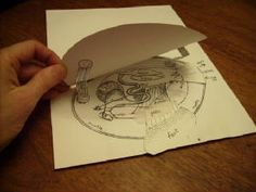 Cut-and-assemble Paper Clam (showing inside anatomy)