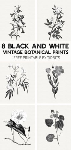 Beautiful and minimalistic wall art - grab your free black and white vintage botanical prints, by TIDBITS. decor diy botanical prints FREE Black and White Vintage Botanical Prints - Tidbits Vintage Botanical Prints, Botanical Art, Vintage Art, Vintage Prints, Vintage Decor, Vintage Black, Free Prints, Wall Prints, Print For Walls