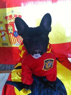 Lola, la más forofa de Paco Gil, siempre con la Roja! French Bulldog, Smile, Animals, Red, Animales, Animaux, French Bulldog Shedding, Bulldog Frances, Animal