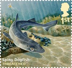 Undated handout photo issued by Royal Mail from their Sustainable Fish Special Stamps issue showing a Spiny Dogfish.
