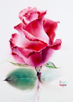 Роза от La Fe