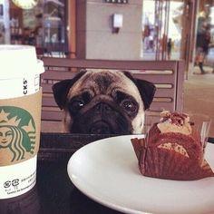 @starbuckssecretss  #starbucksmood #starbucks #coffee #coffeeadict #coffeeandlife #coffeelover #starbuckslover #starbuckscoffee #icedcoffee #latte #espresso #takeaway #kahve #coffeerem #coffeesesh #coffeeprops #takeawaycoffee #starbucksaddict #starbuckstumbler #starbuckstakeover #starbuckscup #starbucksmug #follow #barista #fashion #blogger #frappuccino by starbucksmood