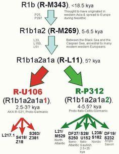 R1b Migrations