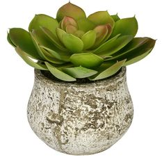 Artificial Echevaria Succulent Desk Top Plant in Decorative Vase... (199.500 COP) ❤ liked on Polyvore featuring home, home decor, floral decor, fake indoor plants and artificial indoor plants