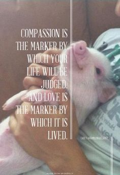 Compassion is the marker by which you life will be judged; and love is the marker by which it is lived compassion love animals pigs Beautiful Creatures, Animals Beautiful, Animals And Pets, Cute Animals, Baby Animals, Vegan Quotes, Stop Animal Cruelty, Vegan Animals, Mundo Animal