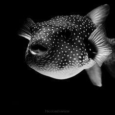 Dark Zoo by Nicolas Evariste