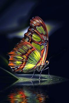 Butterfly Photos, Butterfly Kisses, Butterfly Wallpaper, Butterfly Wings, Butterfly Painting, Beautiful Bugs, Beautiful Butterflies, Beautiful Butterfly Pictures, Beautiful Creatures