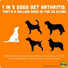 dog arthritis statistic    1 in 5 dogs get arthritis. What we can do to help!