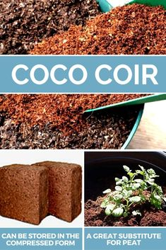 Coco coir or coconut coir is extracted from the fibrous inner shell of the coconut. It is used as the best soil-alternative for growing plants . Growing Gardens, Growing Plants, Recycling Containers, Container Gardening, Gardening For Beginners, Gardening Tips, Wild Lettuce, Grow Bags, Peat Moss