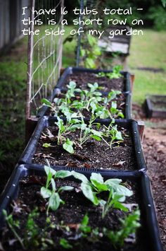 my fall garden planted! love this way to garden