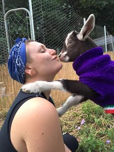 Rescue Goat Does Whatever He Feels Like, All The Time