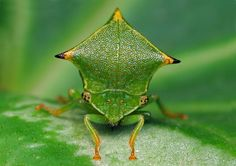 Cool Pictures of Alien Insects - Insect Macro Photography   Cool Pictures   Cool Stuff