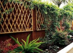 Trellis Design Ideas: Wall-Mount Trellises Bambus im Gartenstil: Bamboo Trellis, Arbors Trellis, Bamboo Wall, Bamboo Fence, Garden Trellis, Privacy Trellis, Gabion Fence, Wall Trellis, Trellis Ideas