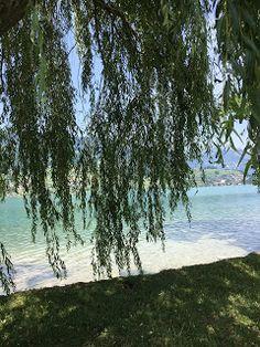 Blog über das Reisen und wandern. Zurzeit vorallem Wandern in der Schweiz. Fernziel ist der Fernwanderweg E1 Hiking Dogs, Switzerland, Summertime, Trail, Outdoor, Beach, Plants, Blog, Hiking
