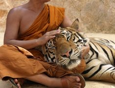 Tiger Temple, Thailand. (I'm allergic to housecats. I wonder if I'd be allergic to large cats, too. . .)
