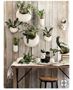 Designed by our frequent collaborator Shane Powers, these Ceramic Wall Planters (with one designed specifically for orchids) turn plants into works of art. Arrange several in a group to create a hanging garden.The new indoor gardening Cool Plants, Air Plants, Indoor Plants, Potted Plants, Indoor Succulents, Porch Plants, Hanging Succulents, Green Plants, Succulents Garden