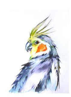 Cockateil make a great tattoo in that piece for my grandma to represent the birds we had. Watercolor Bird, Watercolor Animals, Watercolor Paintings, Animal Drawings, Art Drawings, Cockatiel, Budgies, Rainbow Art, Bird Art