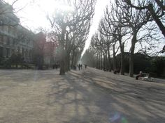 Before the leaves at Jardin des Plantes garden