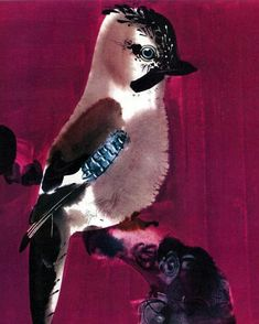 My Animals by Mirko Hanak Blue Jay, My Animal, Old Friends, Bird, Animals, Fictional Characters, Animales, Animaux, Birds