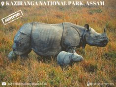 """Kaziranga National Park 