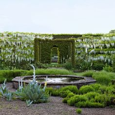 The Cloister Garden at Petworth. An octagonal spring-fed pond sits in the center of The gravel garden, In which lavender and self-seeding verbascum Grow. The garden's other plantings include rosemary, cistus, yucca, agapanthus, and Gallica Roses. Photo by Tim Botherton.