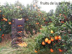 Naranjas dulces y ecológicas