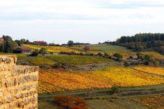 Weekend dans le Beaujolais : 8 expériences à ne pas louper ! - Chouette World - Blog voyage Le Beaujolais, Blog Voyage, Vineyard, Outdoor, Owls, Outdoors, Vine Yard, Vineyard Vines, Outdoor Living