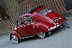 Nice looking beetle.