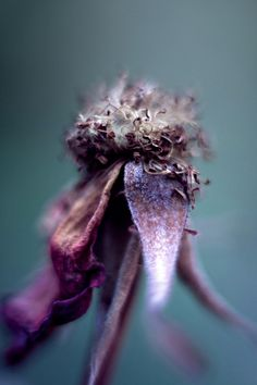 Shades of purple Purple Haze, Shades Of Purple, All Things Purple, Seed Pods, Natural Forms, Macro Photography, Photography Flowers, Flower Power, Beautiful Flowers
