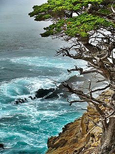 Point Lobos State Reserve, Alan Memorial Trail | image by carol koceja