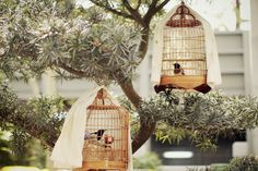 Birds cage - common sense found in parks in Hong Kong Hong Kong Art, Cherry Blossom Girl, Tree People, Pink Petals, City That Never Sleeps, Bird Cages, Favim, Beautiful Eyes, Hanging Chair
