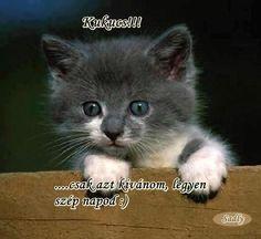 Good Morning Good Night, Grumpy Cat, Needle Felting, Love You, Thoughts, Fun, Anime, Hair Styles, Inge Look