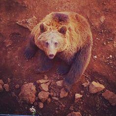 El oso yogui... #cabarceno #parquenatural