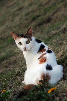 Cat 花貓   by Melinda ^..^