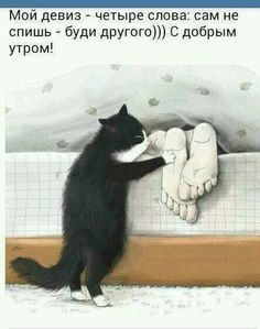 Доброе утро Good Morning Greetings, Funny Phrases, Art Pictures, Funny Pictures, Cats And Kittens, Christmas Cats, Good Day, Man Humor, Animals And Pets