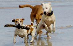 Traumzaubereien: Facebook-Krimi Hundegruppe
