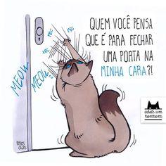 A vida na visão dos gatos
