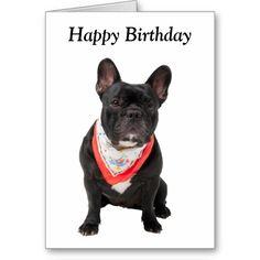 French Bulldog,  happy birthday greeting card.  Such a cute little dog