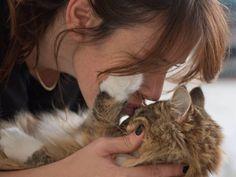 Como nos gustan unos mimos al final del día!! #gato #cat #mimos #cositalinda #photo #photooftheday  #lovelycat @anairivasrod by vaneroel