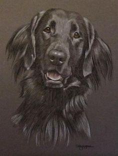 Flat Coat Retriever Portrait - Tilley