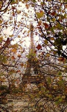 The Eiffel Tower in Autumn, Paris