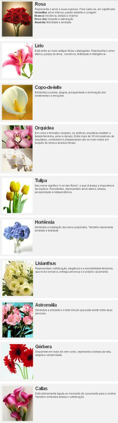o significado da flores