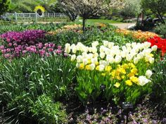 Missouri botanical gardens | Fotos de Missouri Botanical Garden, Saint Louis – Fotos do Atração ...