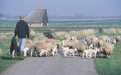 'wildlife' on the island of Texel ;)