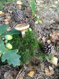 Autumn. I believe in Fairy homes.